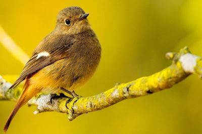 small songbird on branch