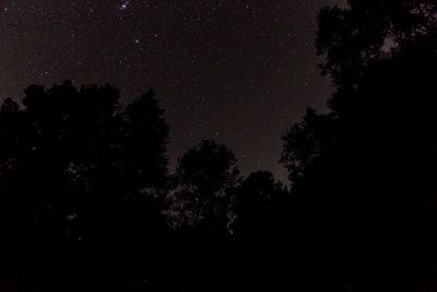 starry sky through trees