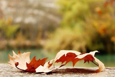 pretty fall leafs