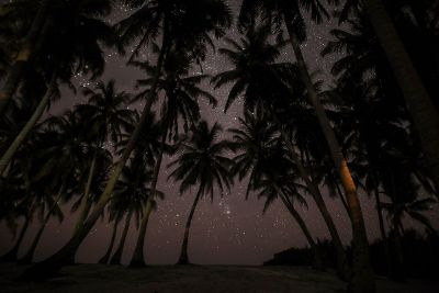 stars above palm trees
