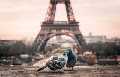 birds cuddling on paris