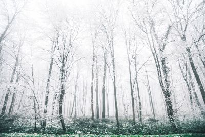 snow dried forest