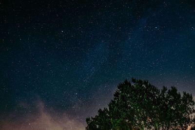 tree in starry sky