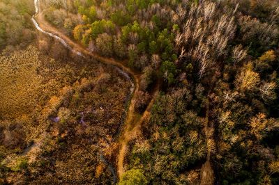 aerial view of marshy forest