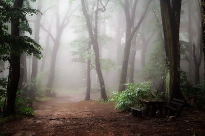 foggy forest with lunch table