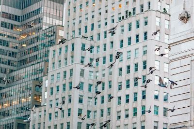 pigeons flying in a city