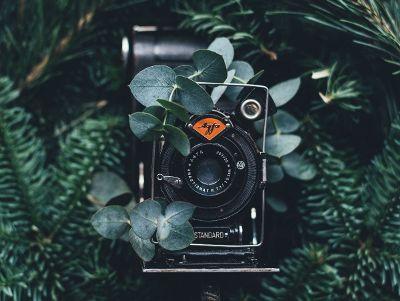 camera in plants