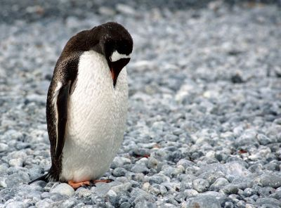 sad lonely penguin
