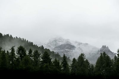 foggy mountains with trees