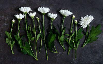 drying cut mum flowers