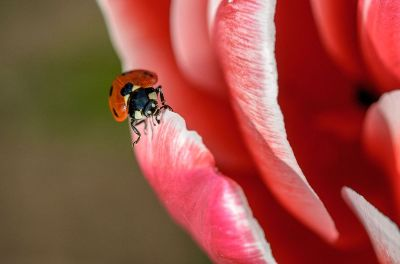 lady bug sitting on a flower
