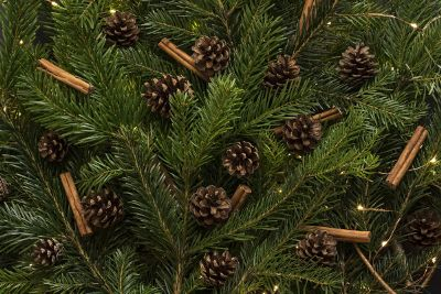pine cones in the fir tree branches
