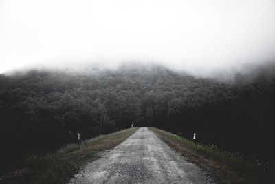 road leading to forest