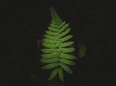 green fern leaves in darkness