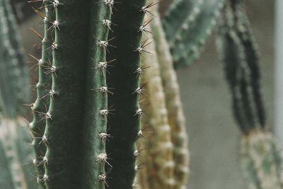 cacti grouping