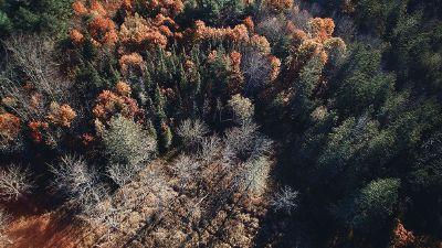 sun on forest