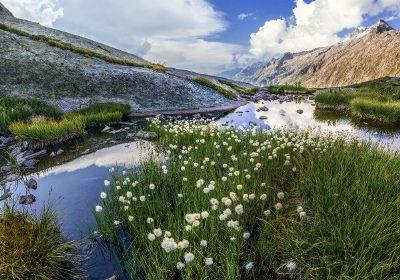alpine panorama with beautiful flowers