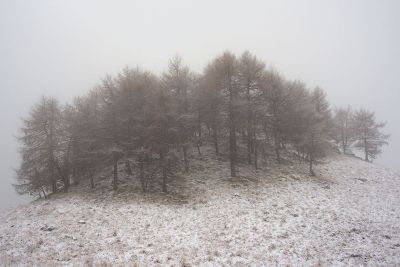 cluster of trees on snowy hill