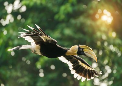 toucan flying