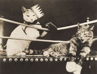 cats boxing
