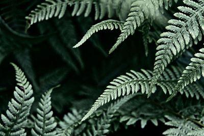 green ferns on black backdrop